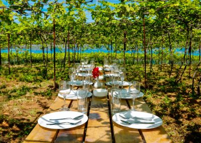 Meals with vineyard views